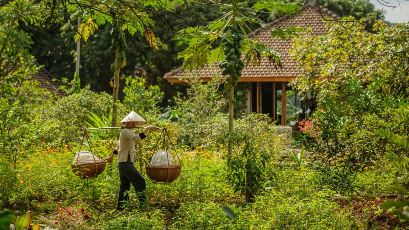 Vietnam-Ninh Binh-Tam Coc Garden10