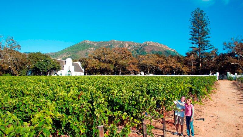 Zuid-Afrika-algemeen-koppel tussen de wijnvelden
