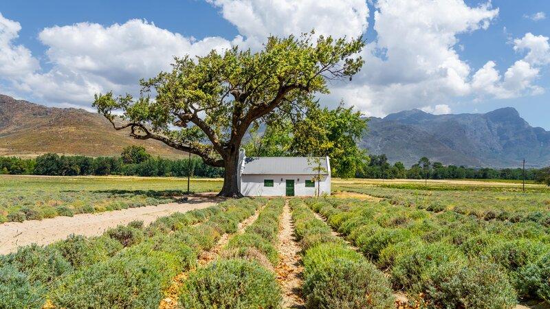Zuid-Afrika-Kaapse-Wijnlanden-streek-7