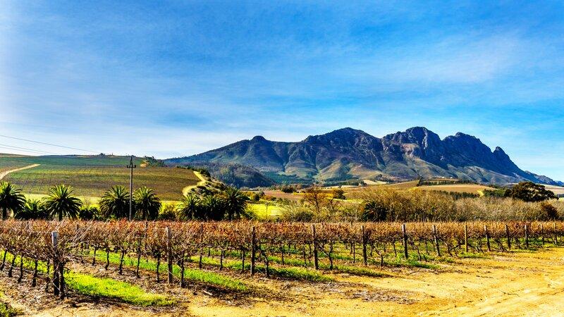 Rondreis Zuid-Afrika: Kaapstad en de wijnlanden