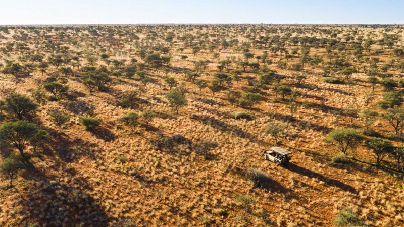 Zuid-Afrika-Tswalu-Kalahari-Private-reserve-the-motse-safarilodge-savanne