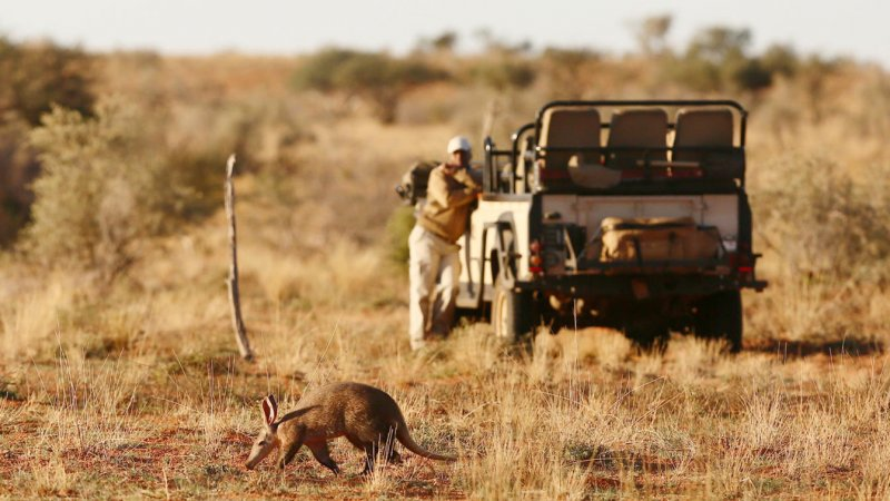 Zuid-Afrika-Tswalu-Kalahari-Private-reserve-the-motse-safarilodge-wetu-safari-2