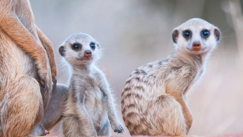 Zuid-Afrika-Tswalu-Kalahari-streek-hotel-Motse-wetu-16