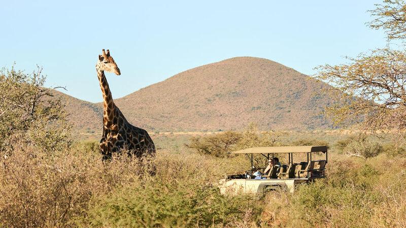 Zuid-Afrika-Tswalu-Kalahari-streek-hotel-Motse-wetu-gamedrive-7