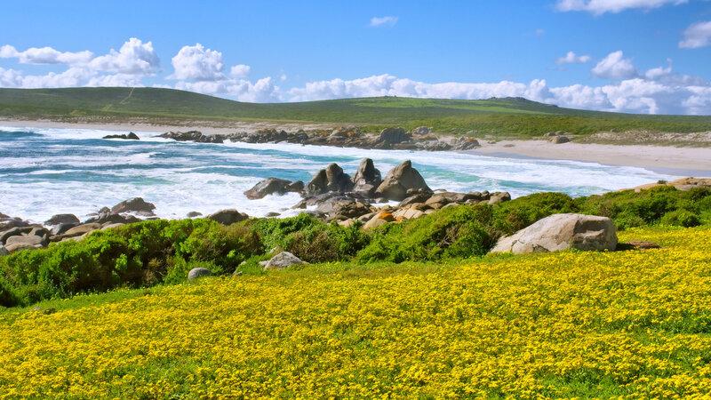 Zuid-Afrika-West-Coast-NP-streek-2