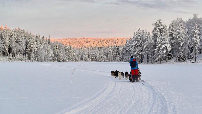 Zweden-Lapland-Gunnarsbyn-Arctic-Retreat-husky-safari