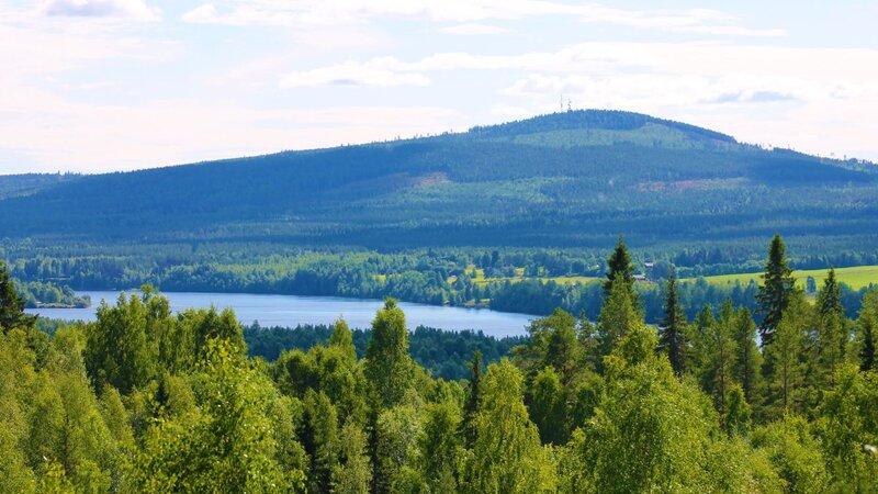 Zweden-Lapland-Harads-Treehotel-summer-natuur-3-lina-sophia-olovsson-2