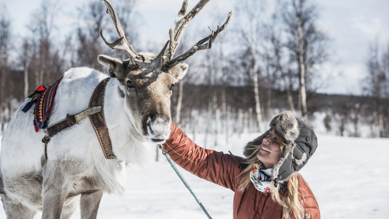 Zweden-Lapland-Kiruna-Fjellborg-Arctic-Lodge-rendier