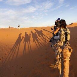 Abu Dhabi-woestijn kameel