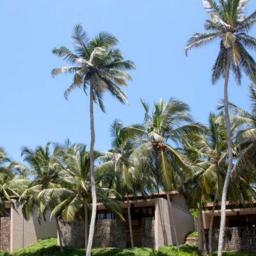 AD-Tangalle-Amanwella-knipsel-palmbomen
