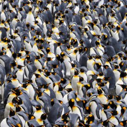 Antarctica rondreis (1)