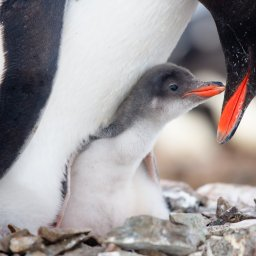 Antarctica rondreis (4)