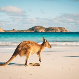 Australië - Lucky Bay - Cape Le Grand National Park - Esperance -Western Australia