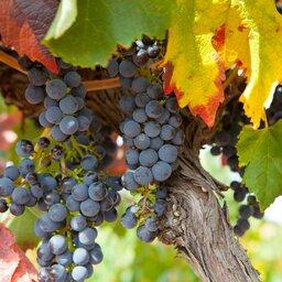 Barossa vallei - Australië - wijn (8)