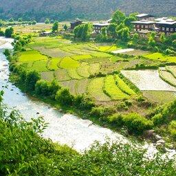 Bhutan-algemeen-rijstvelden