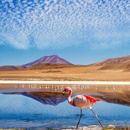 Bolivia-Titicaca meer