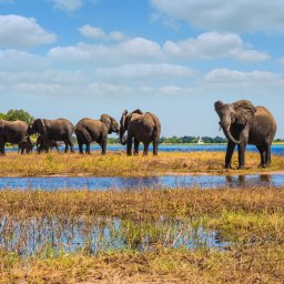 Botswana-ChobeElephantCamp-resized