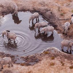 Botswana-KhwaiPrivateReserve-Skybeds3