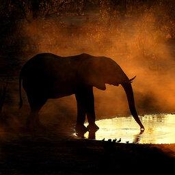 Botswana-KhwaiPrivateReserve-Skybeds5