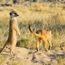 Botswana-Makgadikgadi zoutpannen (1)