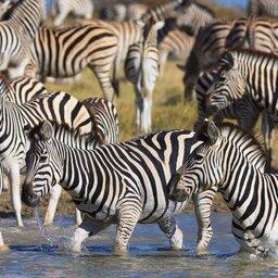 Botswana-Makgadikgadi zoutpannen (5)