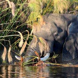 Botswana-Moremi Game Reserve (2)