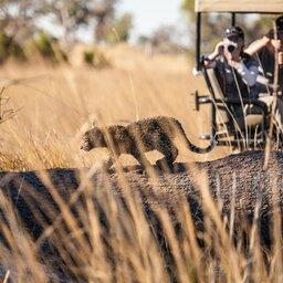 Botswana-Okavango Delta-Pom Pom Camp5