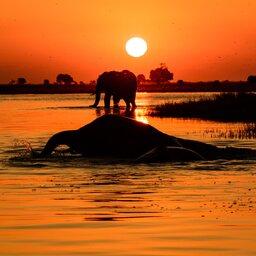 Botswana_Olifanten