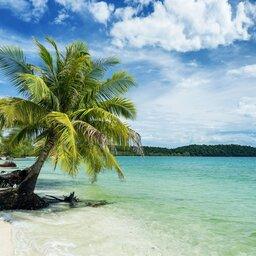 Cambodja-algemeen-strand met palmboom