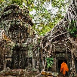 Cambodja-Siem Reap-hoogtepunt-Ta Prohm