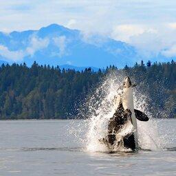 Canada-hoogtepunt-whalewatching (5)