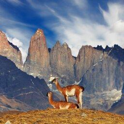 Chili - bergen - lama
