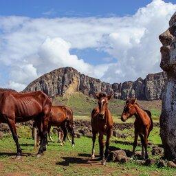 Chili - Paaseiland - moai - rapa nui (11)