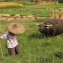 China-Yangshuomountainretreat (17)