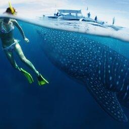 Comoren-Hoogtepunt1-Zwemmen met walvissen