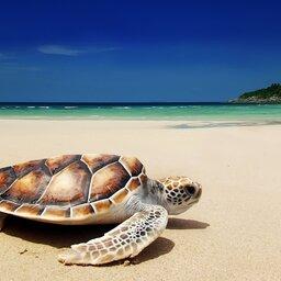 Comoren-Hoogtepunt2-Reuzenschildpadden Spotten