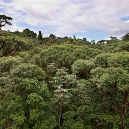 Costa rica - Canopy tour - deathride - Arenal - monteverde (4)