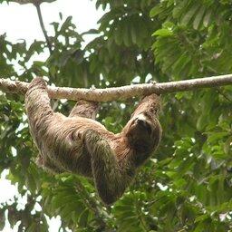 Costa Rica - Manuel Antonio - Si Como No Hotel  (12)