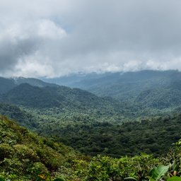 Costa Rica - Nevelwoud - Monteverde (5)