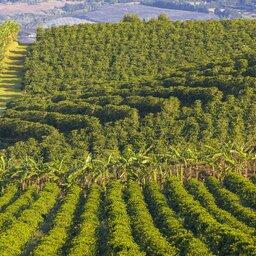 Costa Rica - Poas Vulcano  (8)