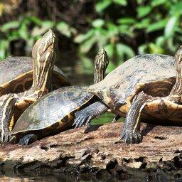 Costa Rica - Tortuguero National Park kopie