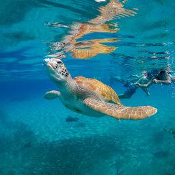 Curaçao-algemeen-zwemmen met schildpadden