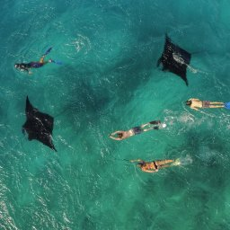 diving-with-manta-rays-in-tropical-green-waters_t20_KoW7G0