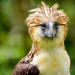 Filipijnen - vogel