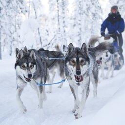 Finland-Lapland-Ivalo-wilderness-hotel-Inari-huskysafari (2)