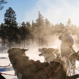 Finland-Lapland-Saariselka-Javri-Lodge-excursie-husky