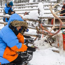 Finland-Lapland-Saariselka-Javri-Lodge-excursie-rendier