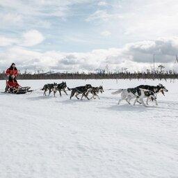 Finland-Lapland-Safaris-huskysafari