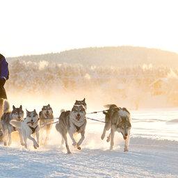 Finland-Lapland-Wilderness-Hotel-Nangu-husky-safari
