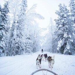 Finland-Zweden-Lapland-husky-safari 7
